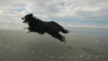 Dog Rynning Along Beach In Slo...