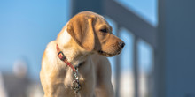 Cute Puppy Standing Under The Warm Sunlight
