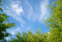 Green Foliage Background Cloudy Sky