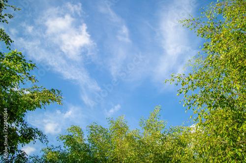 Obraz Green foliage background cloudy sky - fototapety do salonu