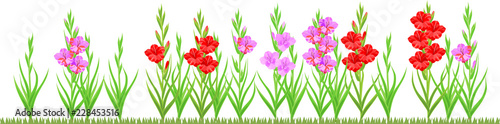 Fotografering Group of blooming gladiolus plant with flowers of different colors isolated on w