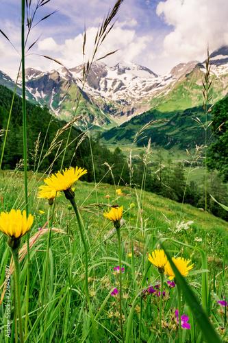 Foto op Plexiglas Groene Alpenwiese