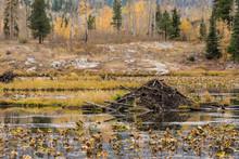 Wetland Area Colorado In Autum...