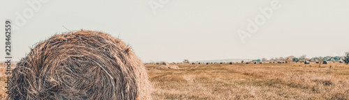 Hay roll on a meadow on a warm summer or autumn day, blue sky Wallpaper Mural
