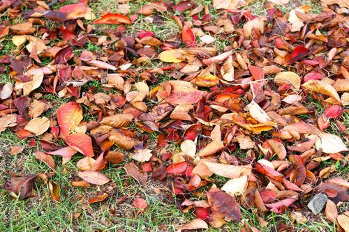 Keuken foto achterwand Picknick Autumn leaves on the grass, autumn background