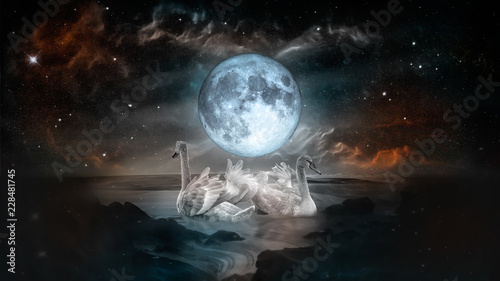 Couple of white swans dancing in the landscape of night sea with fool moon and galaxy stars background.