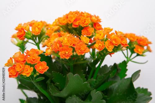 Fotografía  turuncu çiçek