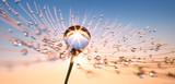 Fototapeta Puff-ball - Pusteblume in Nahaufnahme mit Tautropfen 2