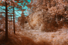 Grass In Amazing Forest In IR