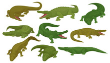 Collection Of Crocodiles, Predatory Amphibian Animals In Different Poses Vector Illustration On A White Background