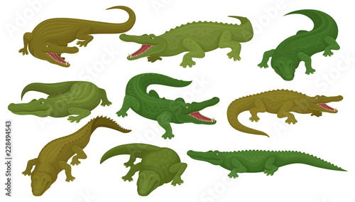 Fotografia Collection of crocodiles, predatory amphibian animals in different poses vector