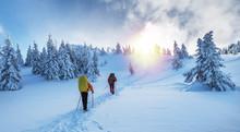 Winter Hiking. Tourists Are Hi...