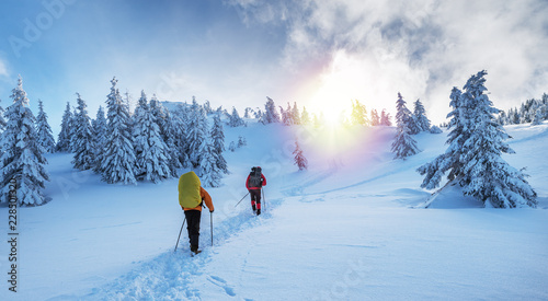 Obraz Winter hiking. Tourists are hiking in the snow-covered mountains. - fototapety do salonu