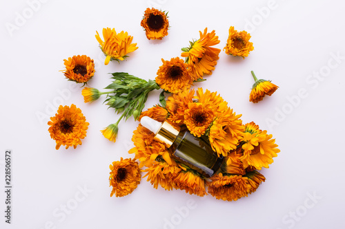 essential oil of calendula on a white background Canvas Print
