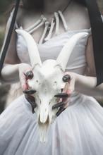 Animal Skull In Creepy Bride Hands. Halloween Concept