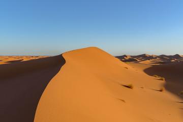 Fototapeta na wymiar Dunes in the desert of Sahara, Morocco.