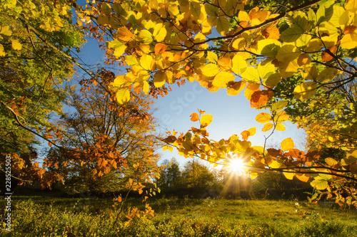 Fotografía  Wunderschöner bunter goldener Herbst Schwarzwald