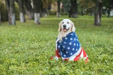 Cute Golden Retriever Dog Wrap...