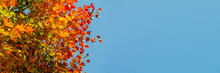 Coloured Leafs Of A Tree In Autumn In Front Of A Blue Sky