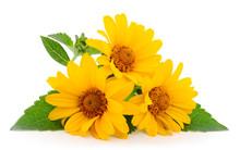 Yellow Flower Rudbeckia, (mini Sunflower).
