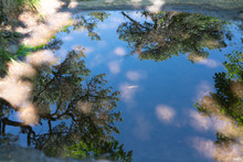 Reflection In Puddle, In Puddle