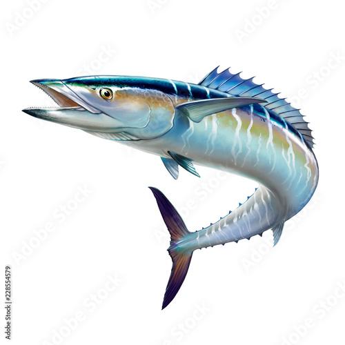 Spanish Mackerel big fish on white