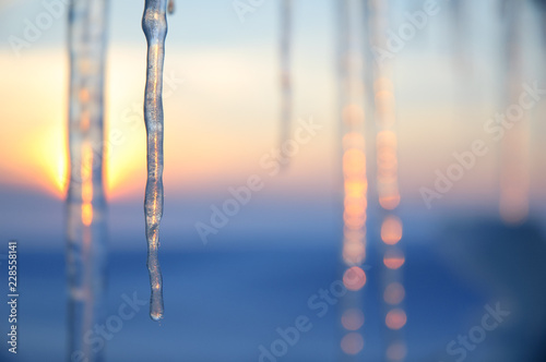 Fotomural Icicles lit by the setting sun