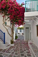 Ile grecque, ruelle typique avec bougainvillier