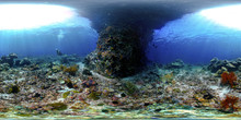 Underwater At Melissa's Garden Pillar, Raja Ampat, West Papua, Indonesia