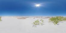 Vegetation On The Dunes At Whi...