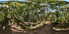 Walking Along The Bushwalk Path, Castaway Island Resort, Qalito Island, Fiji
