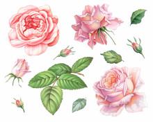 Pink White Vintage Roses  Flow...