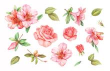 Pink White Rose Vintage Azalea...