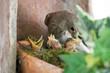 Leinwandbild Motiv Vogel bei Fütterung der Brut
