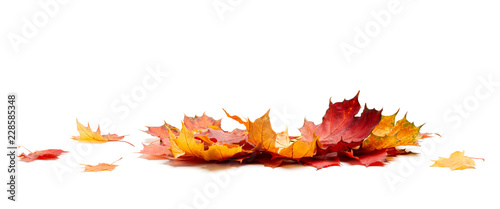 Isolated Autumn Leaves Canvas