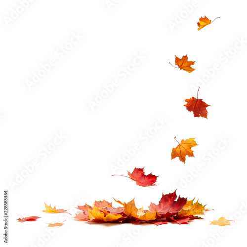 Obraz Isolated Autumn Leaves - fototapety do salonu