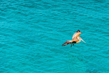 Pelican Flies Against The Sea,...