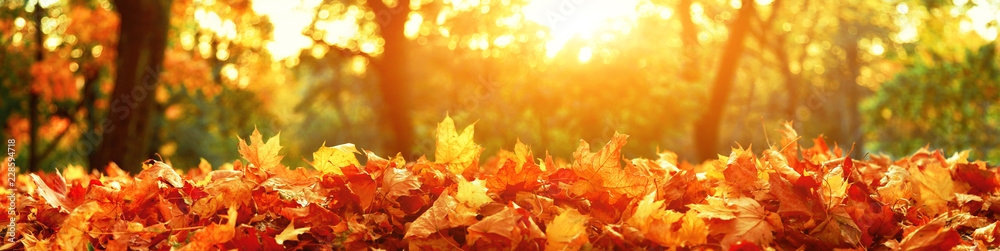 Fototapety, obrazy: Goldener Herbst