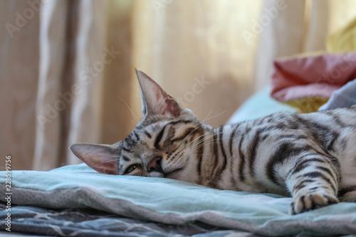 Fotografie, Obraz  반려동물 고양이, 귀여운 고양이