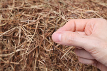 A Hand Holding A Needle In Front Of A Haystack