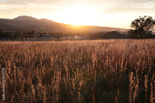 Poster Diepbruine sunset and grass