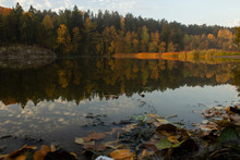 Autumn Colored Trees Reflected In A Forest Lake. Fallen Leaves In The Foreground.