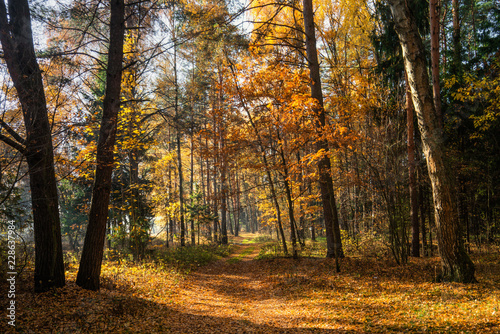 Papiers peints Forets autumn in the forest
