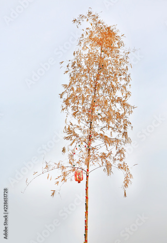 Fotografía  Dried bamboo tree decorative with colorful light bulb and Chinese lantern against white sky background