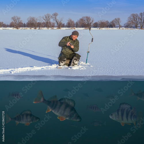 Printed kitchen splashbacks Fishing Winter fishing concept. Fisherman in action. Catching perch fish from snowy ice at lake above troop of fish. Double view under and above water