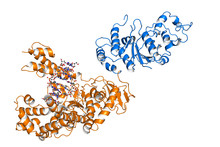 Taq Polymerase Is A Thermostable DNA Polymerase, Frequently Used For PCR, An Important Method In Biomedical Research That Enables Amplification Of Short DNA Segments.