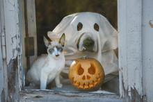 Dog Dressed Like A Ghost And L...
