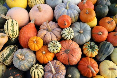 Fotografía Pumpkins and  squash.