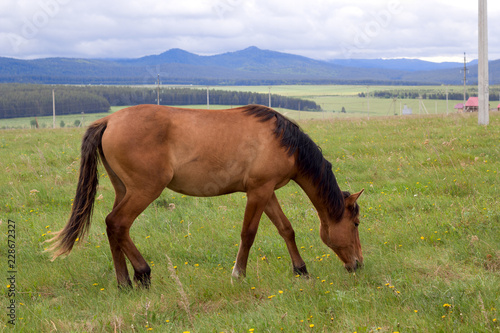red horse with black mane grazing on the field