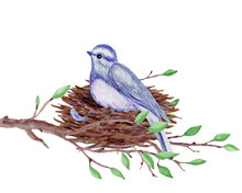 Bird With A Nest On The Tree Branch. Hand-drawn Watercolor Illustration.